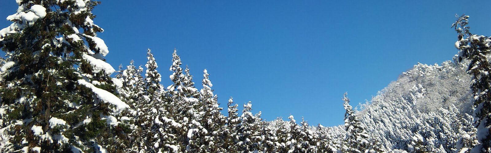 杉林雪と空